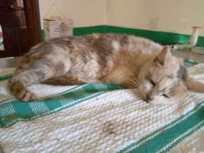 Rescued from a dog attack in Nsambya