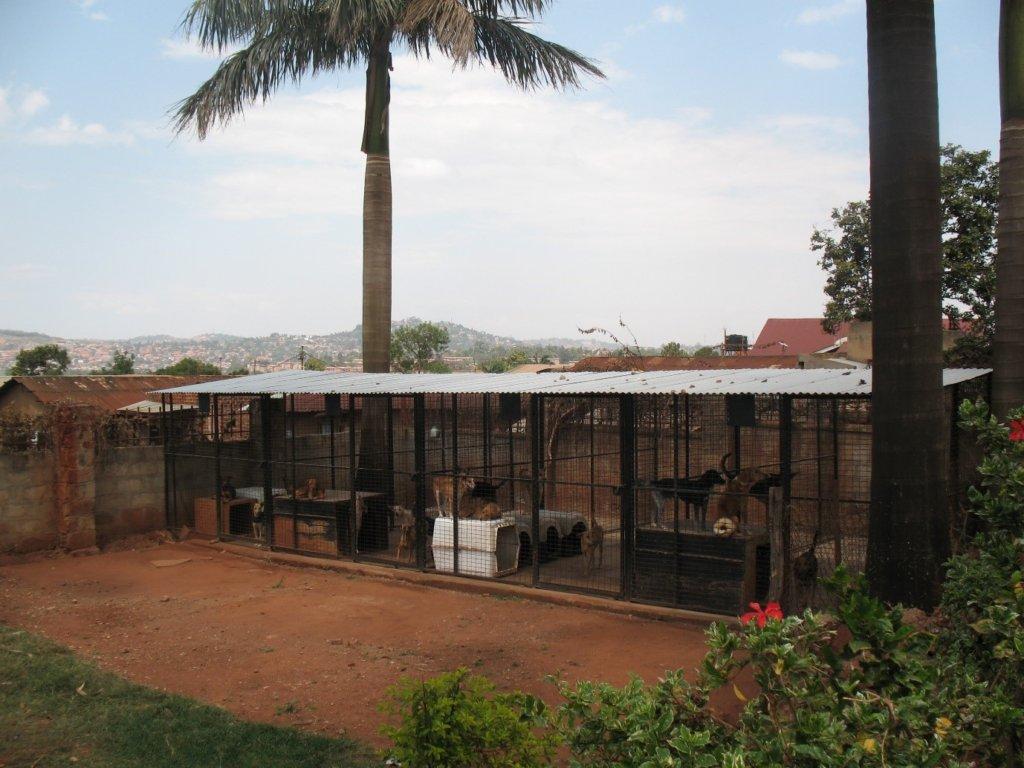 Help Us Transform Uganda's Only Animal Shelter