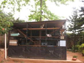 The new cattery at The Haven