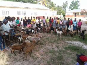 Distributing goats to families in the sponsor pgm.