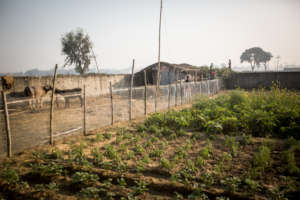 Planning to have an organic garden in Butwal too