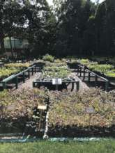 Nursery at TBSE's Biodiversity Research Centre