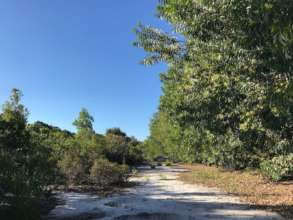 Established acacia corridors seen at Mandena