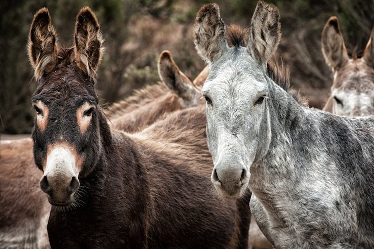 Run RTFs American Wild Horse Sanctuary for a Year