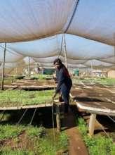 NCP Coordinator buying seedlings