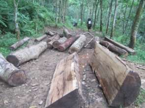 Evidence of illegal logging
