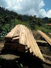 Processed timber in Bukit Barisan forest.