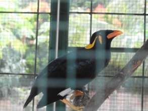 A mynah bird at the illegal zoo