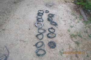 Snares removed from forest