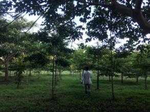 Camino Verde