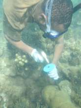 Getting Corals Fragments for Transplanting