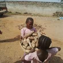 Child-laborers lifting a basket of Cassava