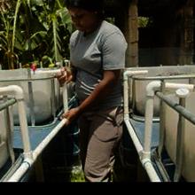 Vanessa G. tends her backyard aquaponics system