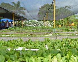 Climate-smart, environmentally friendly farming