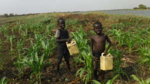 Kids Playing in Crops