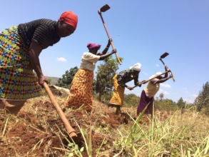 Parents preparing the land for maize and beans