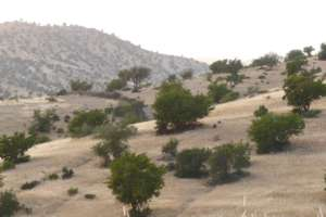 the last shield against desertification