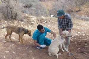 Vaccination against rabies