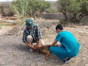 Dog vaccination campaign against rabies