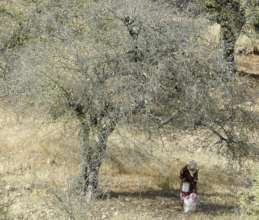 One Health in the Argan Forest