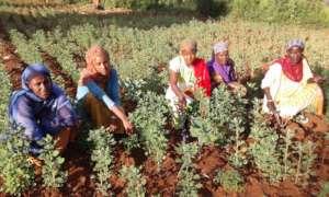 Women with quinoa plants, GrowEastAfrica