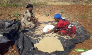 Mega area IDP women selling teff at market