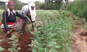 A community garden organized by GrowEastAfrica