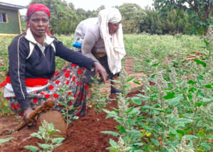 Drought-Resilient Gardens for East Africa