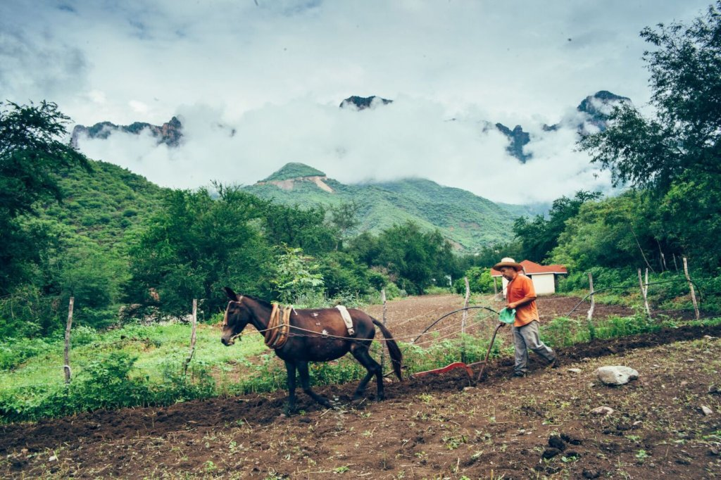 Tarahumara Farm and Run Fund