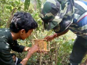 Beekeeping Training
