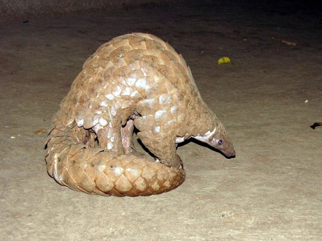 Conservation of Indian Pangolin in 85 villages