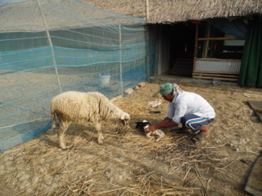 Coastal people are earning from livestocks