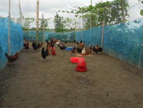 Livestock change the life of coastal people
