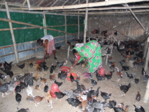 Livestock rearing provides economic support