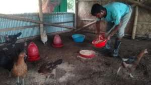 Livestock rearing for livelihood in Covid-19