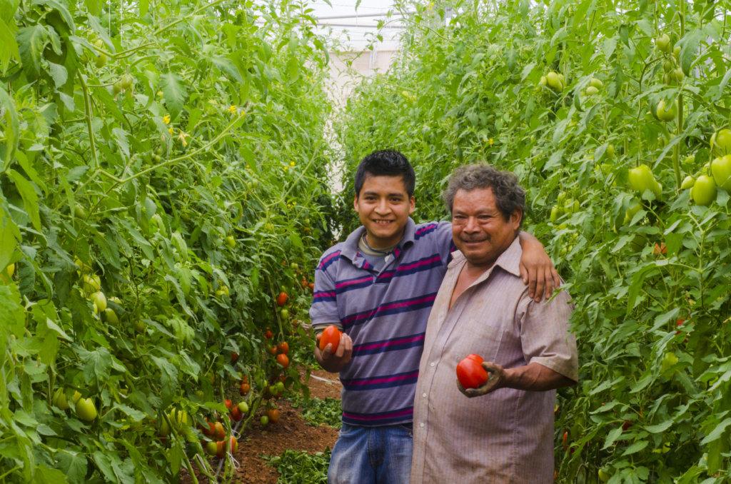 Regenerating Soils, Producing Healthy Food