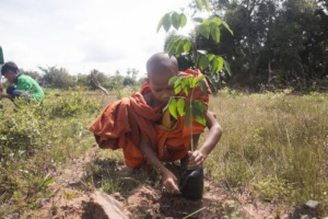 A young monk learns to plant a tree