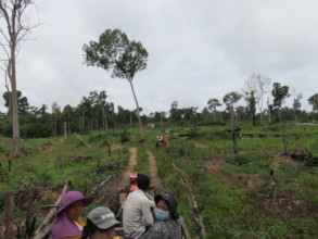 Prey Lang, the forest where we planted in 2017.