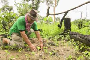 Plant Trees to Restore Cambodian Forests