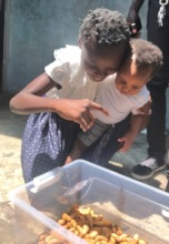 Palm weevil larvae are a popular delicacy in DRC