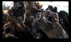 Bushmeat sold in a market tin Kinshasa.