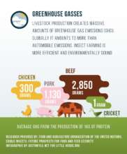 Greenhouse gas emissions and insect farming