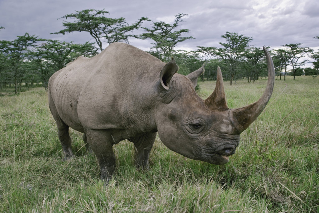 Protecting Tanzania's Elephants & Black Rhinos