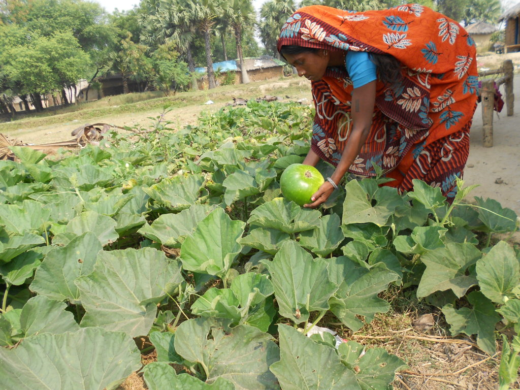 Reports On Plant Kitchen Gardens For Families In Need India Globalgiving