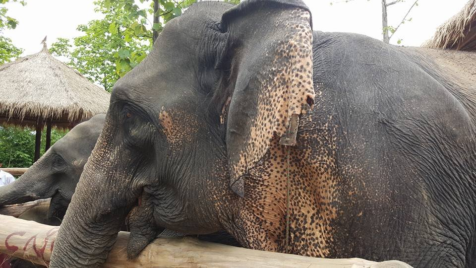 Save Elephants: Grow the Communities They Live In