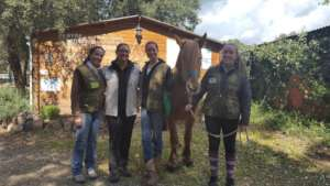 The students, the mentor and a working equine