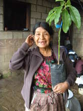 Candelaria with Her New Avocado Tree
