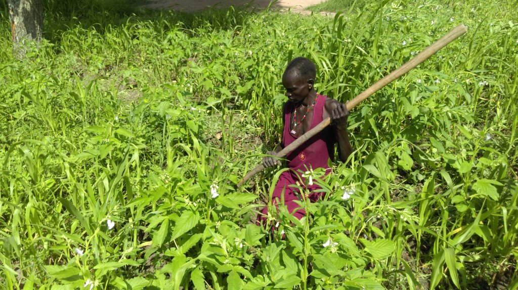 Support 60 farmers in Aweil
