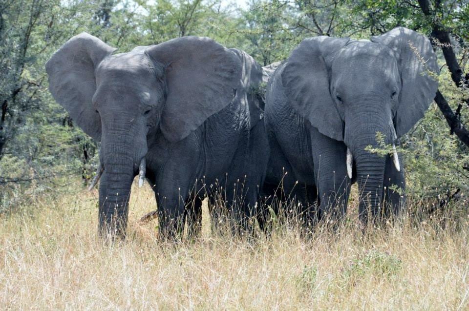 Bees Saving Elephants in Kenya