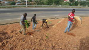 youths planting trees -sponsored by Develop Africa